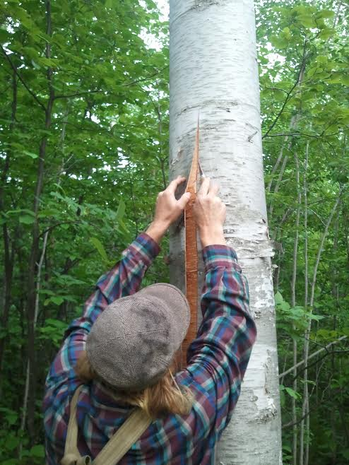 bark peeling 3.jpg