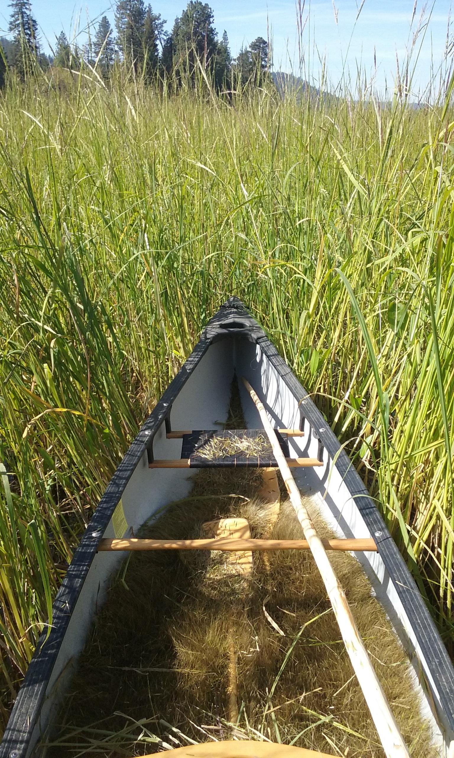 Traditional Wild Rice Harvest