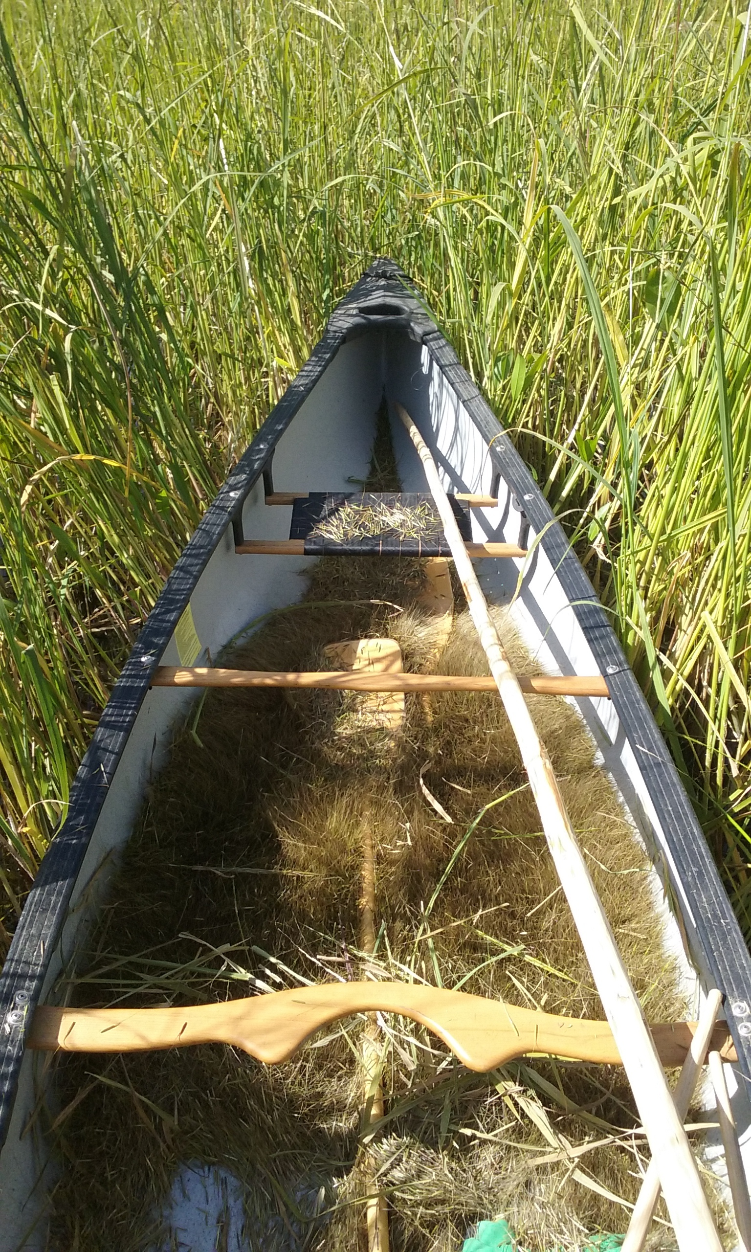 Traditional Wild Rice Harvest = Sustainable Healthy Food From the Land