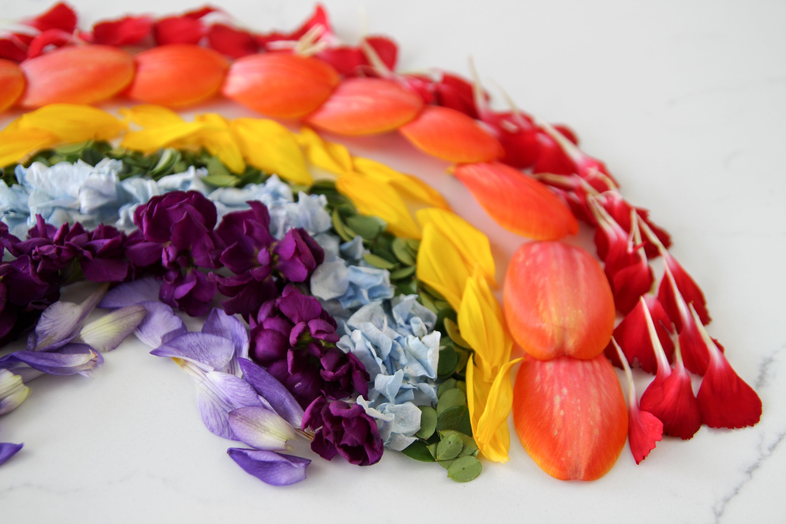 rainbow petals by liz lamoreux