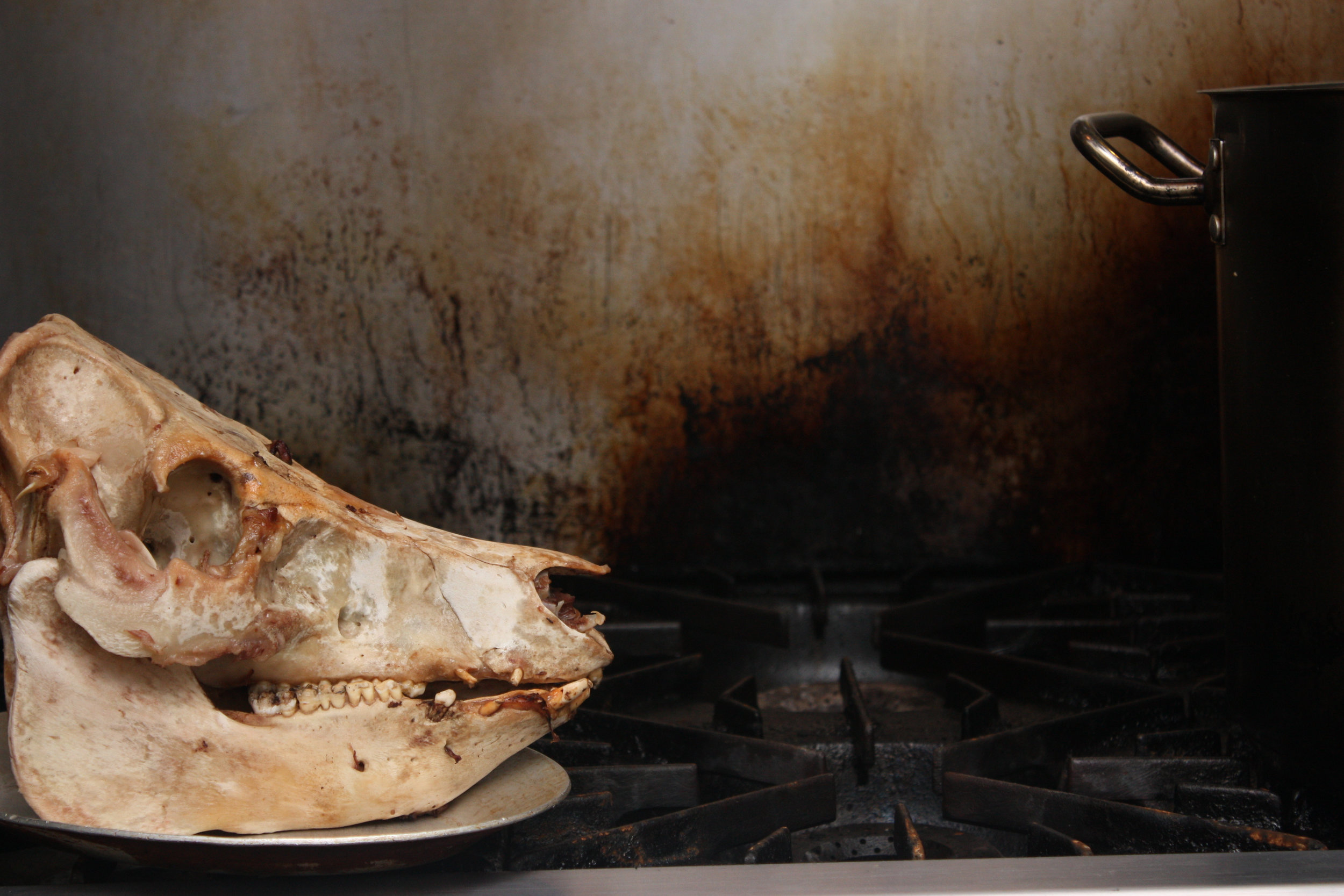 pig head on stove 2_northern spy.jpg