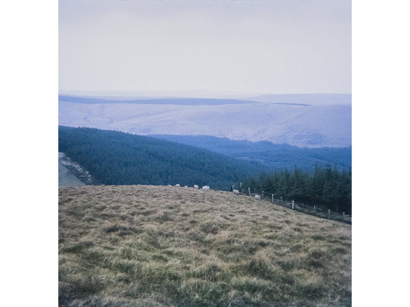british-boy-scouts-sheep-wales.jpg