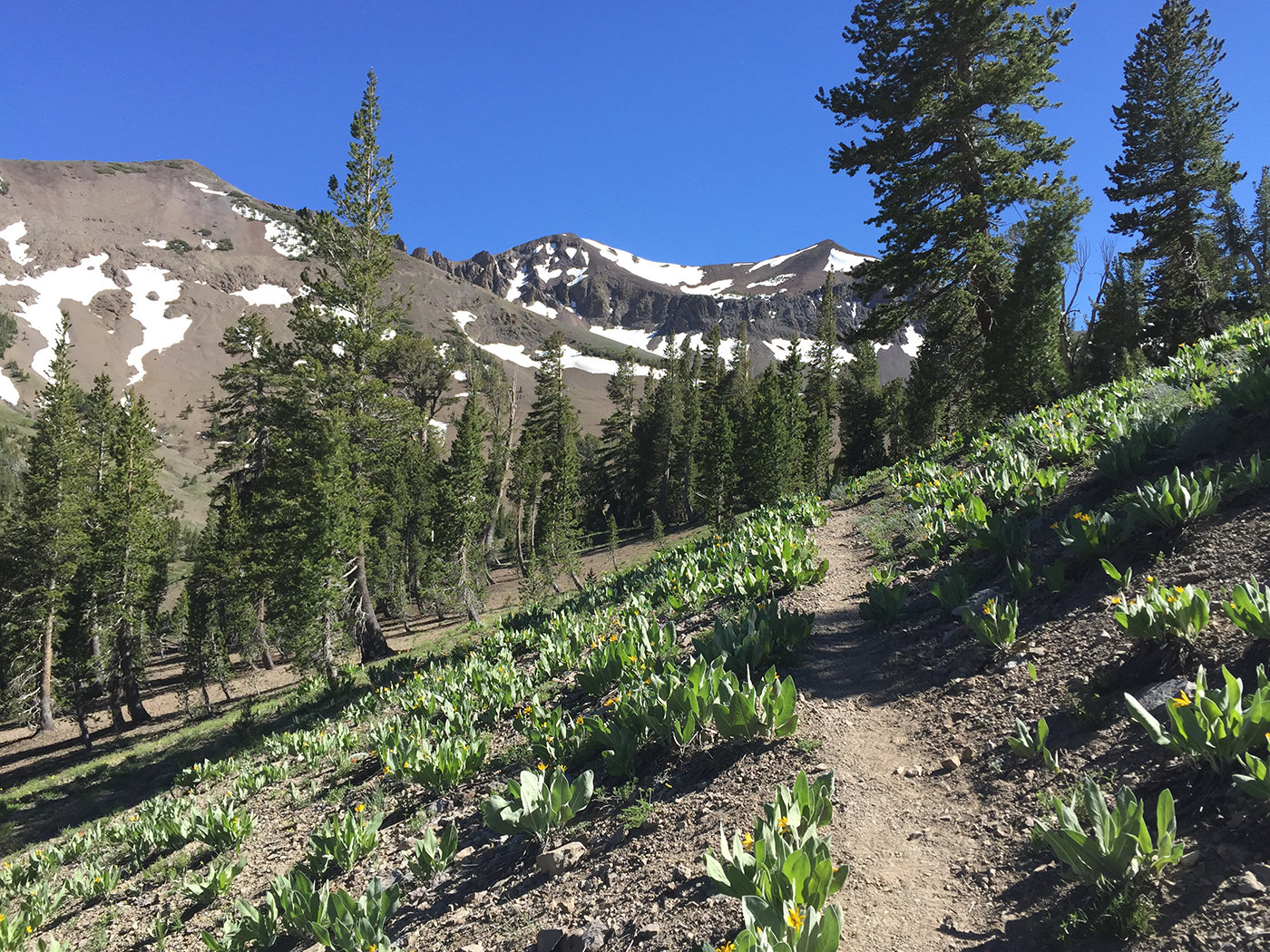 pacific_crest_trail_section_i_2015_9374.jpg