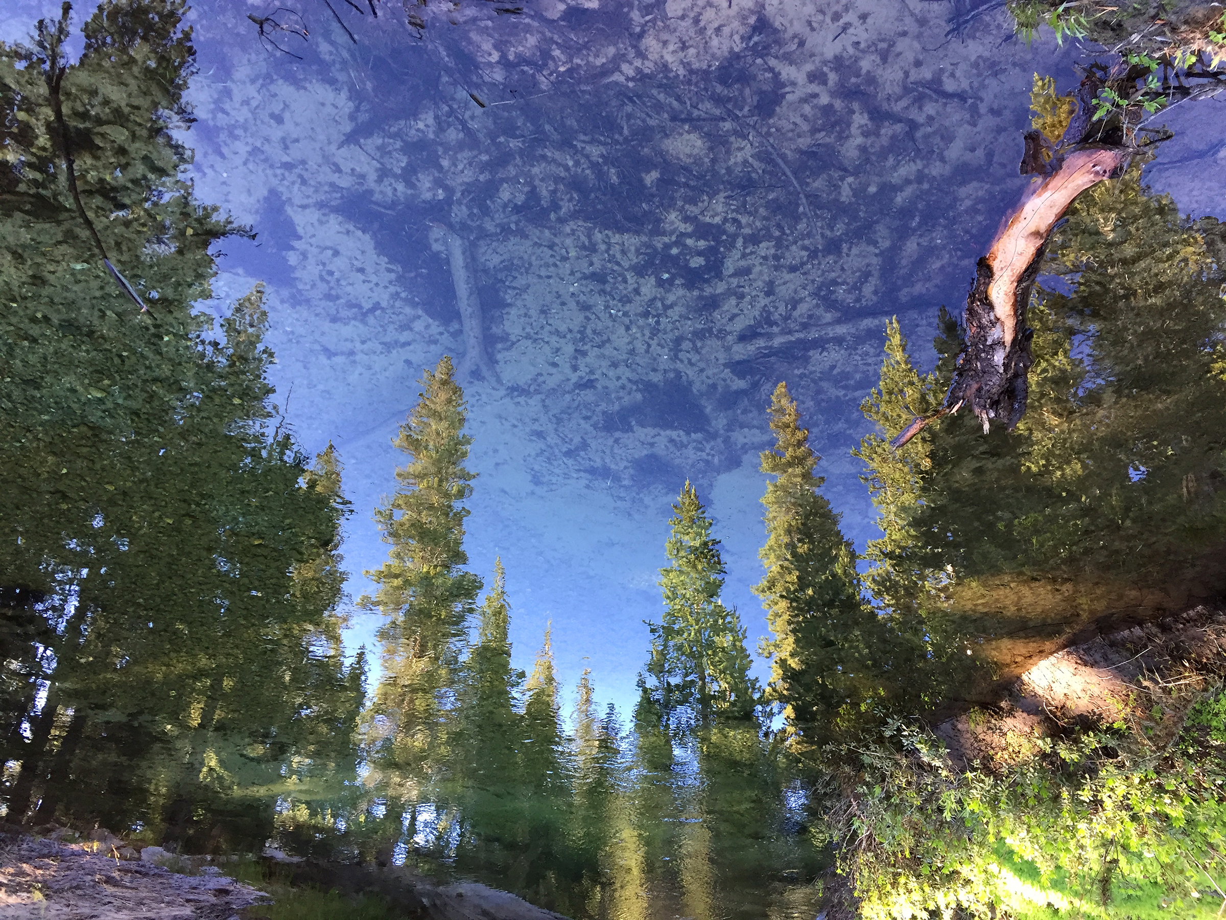 trailname-backstroke-sierra-high-route-2017_0349.jpg