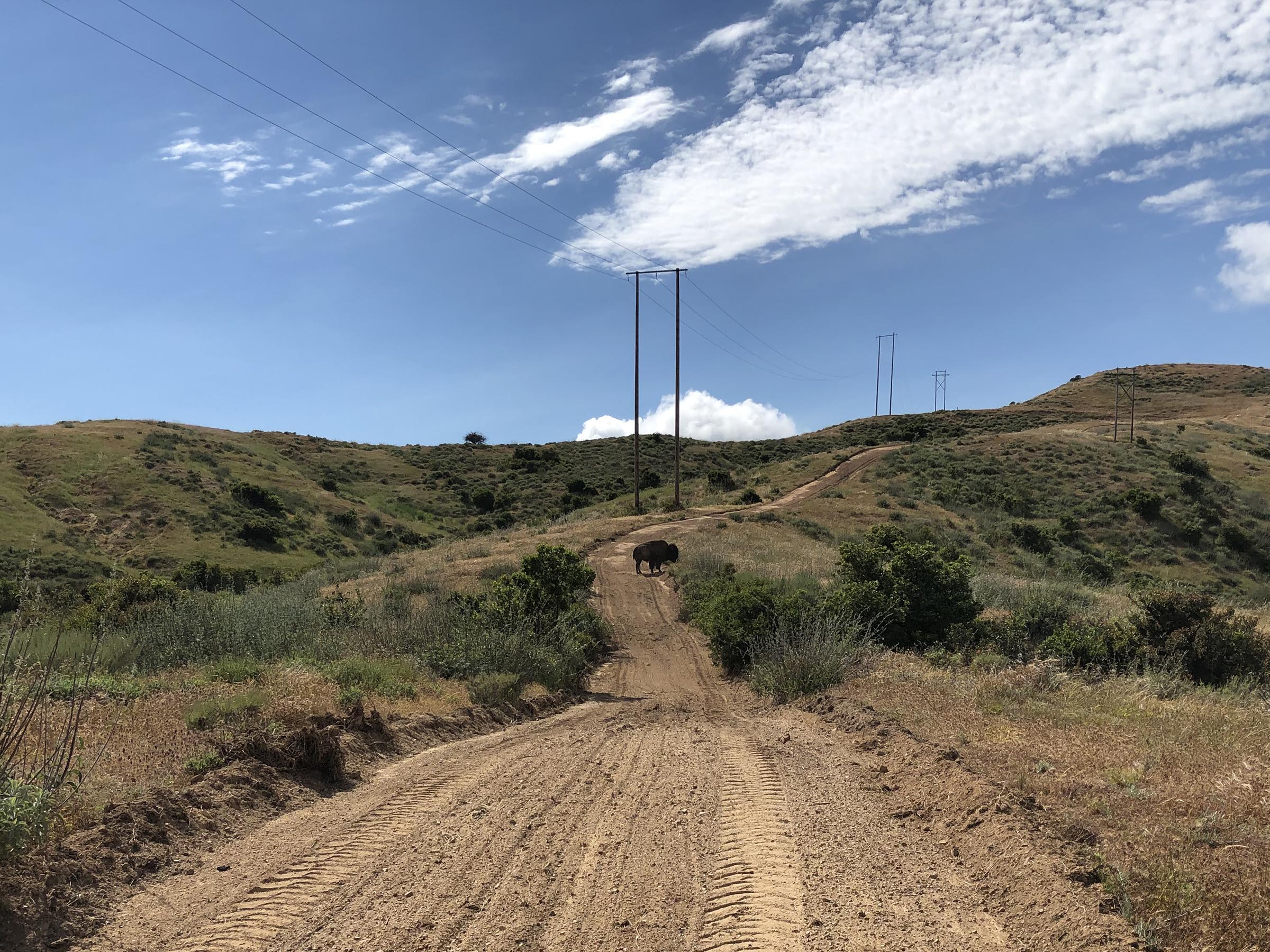 Trans-Catalina Trail-0780.jpg