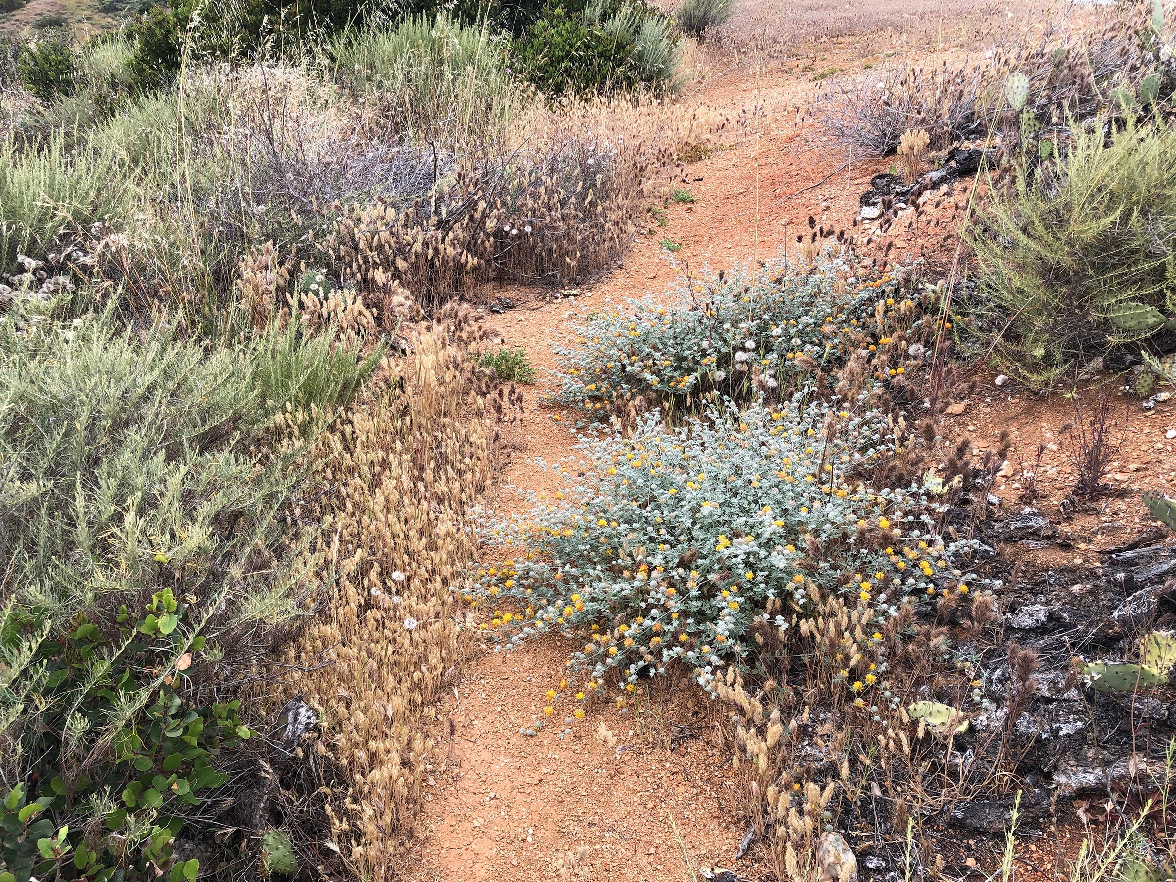 Trans-Catalina Trail-0853.jpg