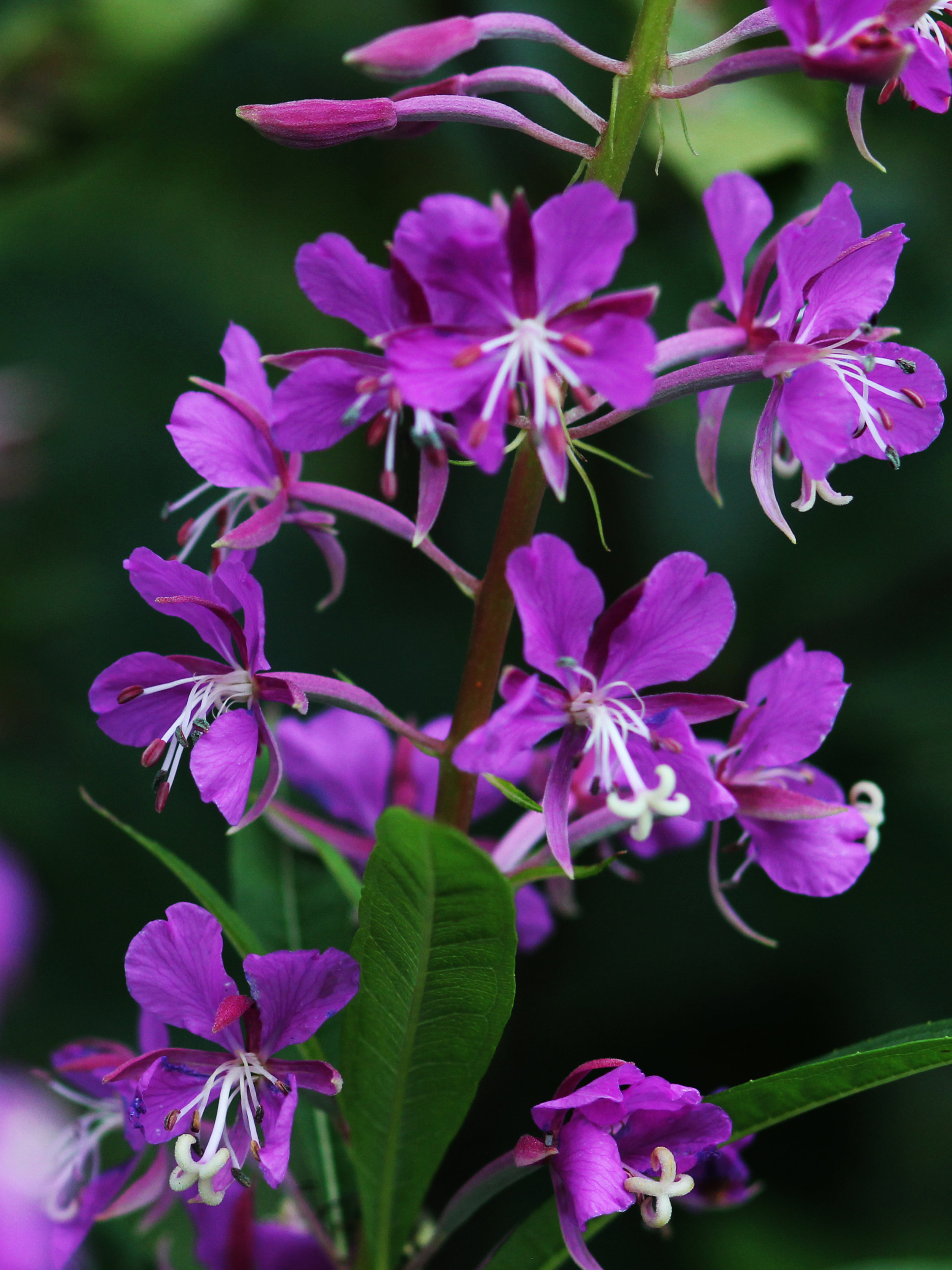 16.07.07_CA_purple_flower_KJC.jpg