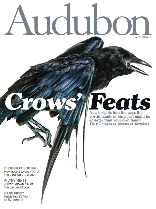 Beyond the Coca Curtain: Can Birding Build an Economic Base in Colombia? - My first feature for Audubon magazine. I spent 15 days wandering around Colombia, covering Audubon's attempts to bring sustainable conservation and meaningful economic development to a country that has more bird species than any other on the planet.