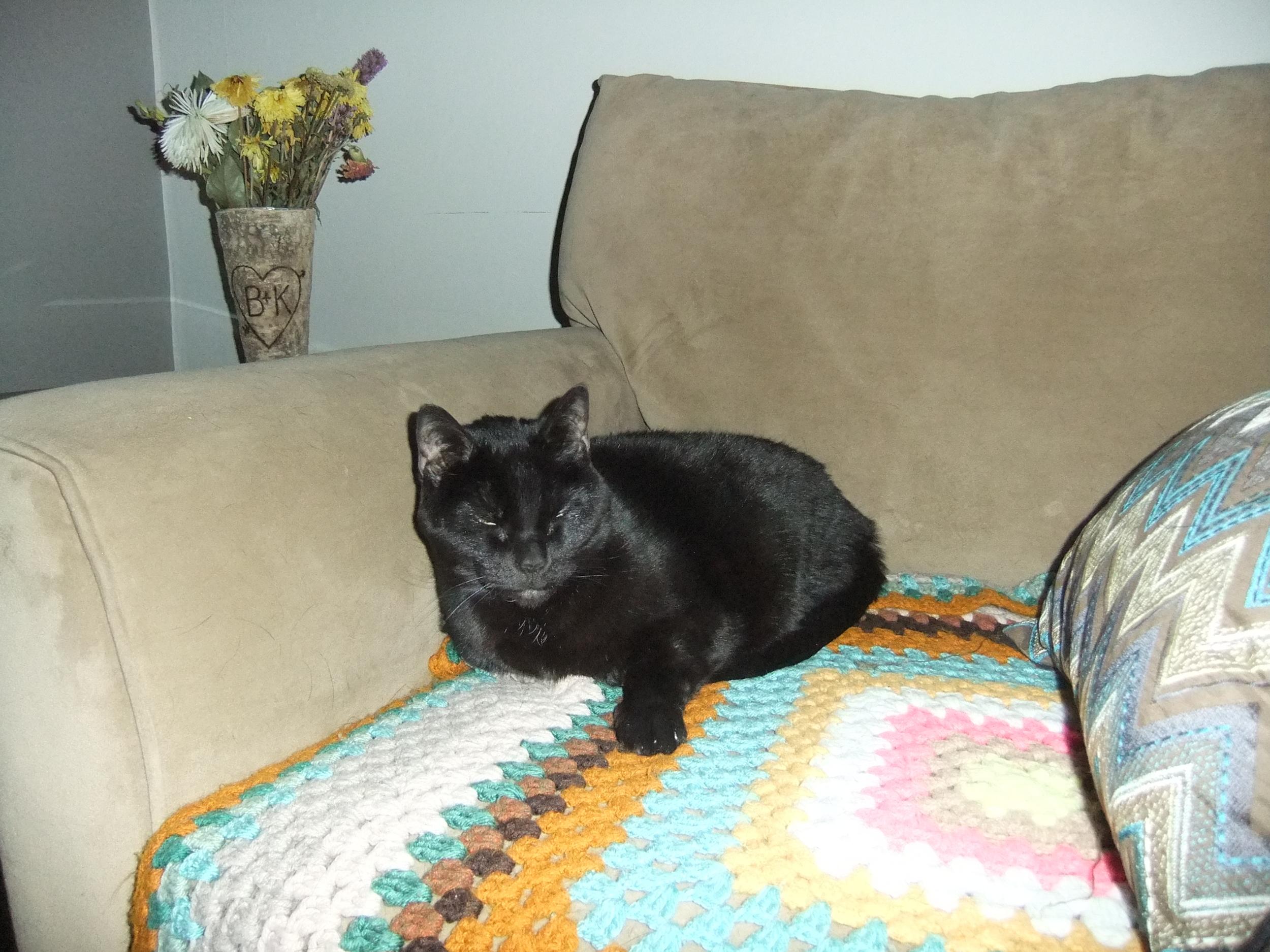 animals, watch, Spear's pets 083.JPG