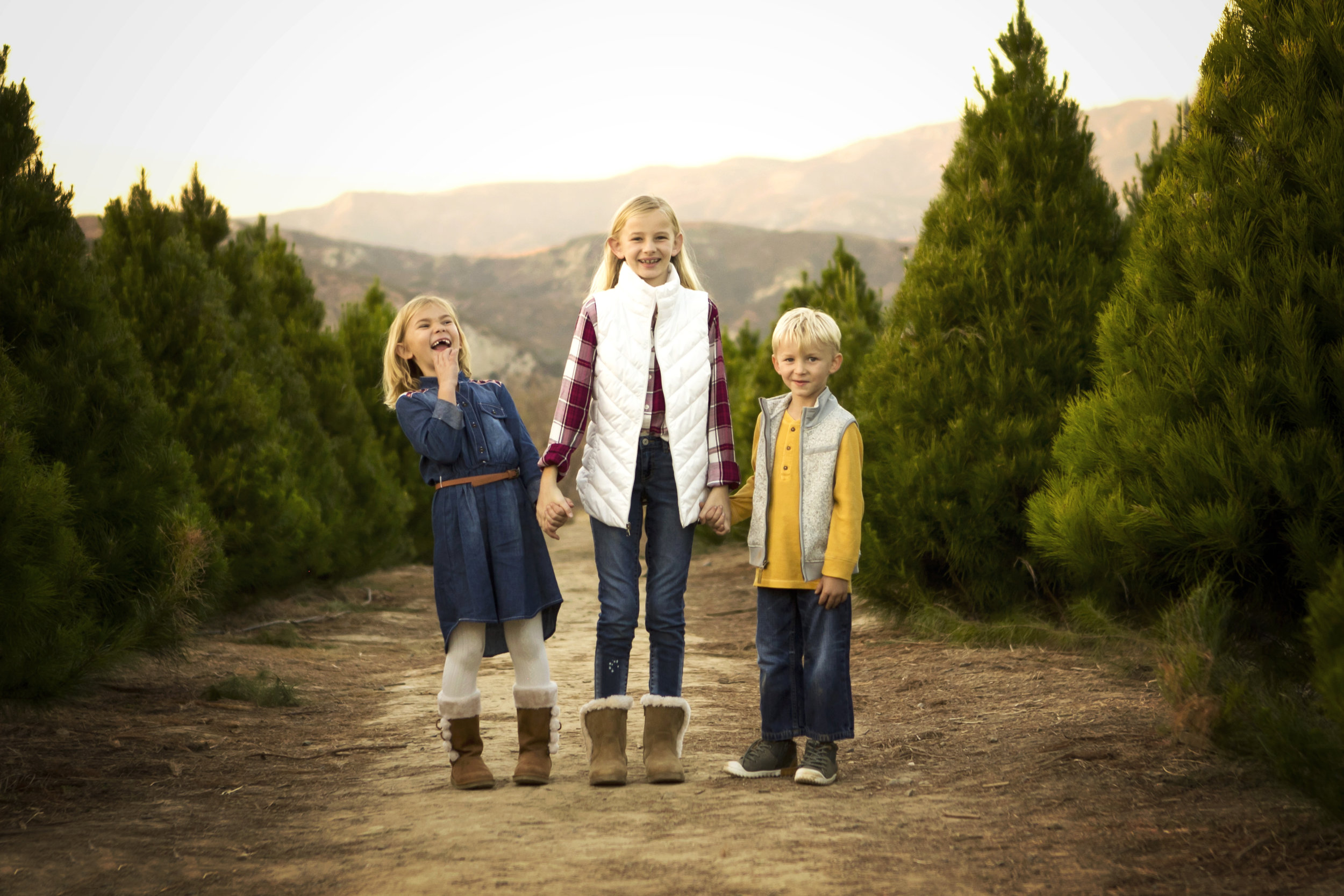 Christmas Tree Minis | Peltzer Pines Photographer