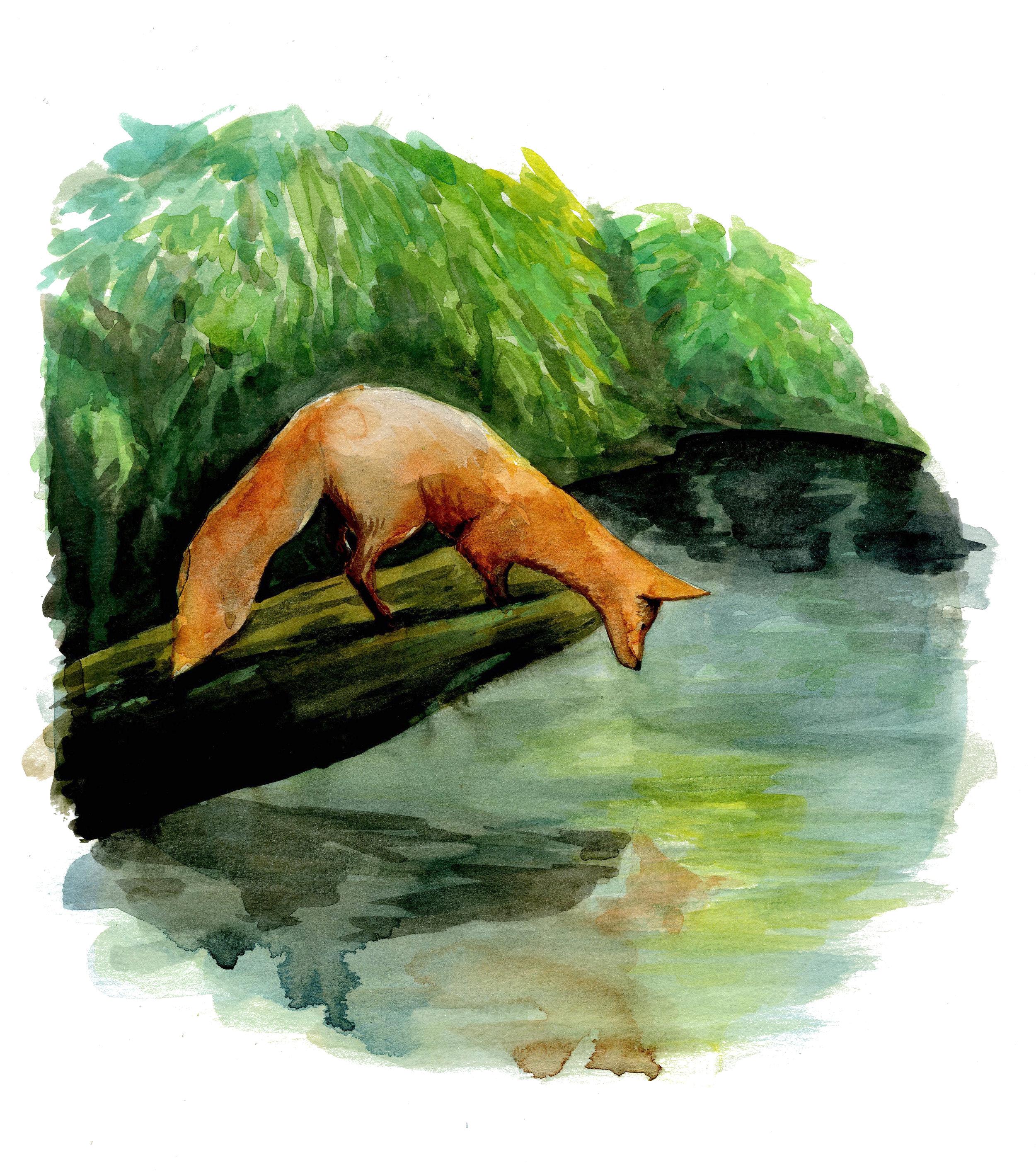 FoxWater.jpg