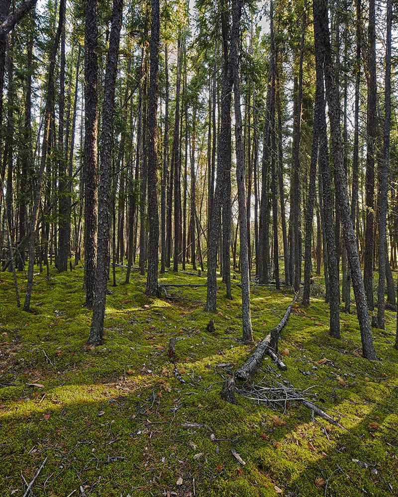 Forest_Photo-stitch-2.jpg