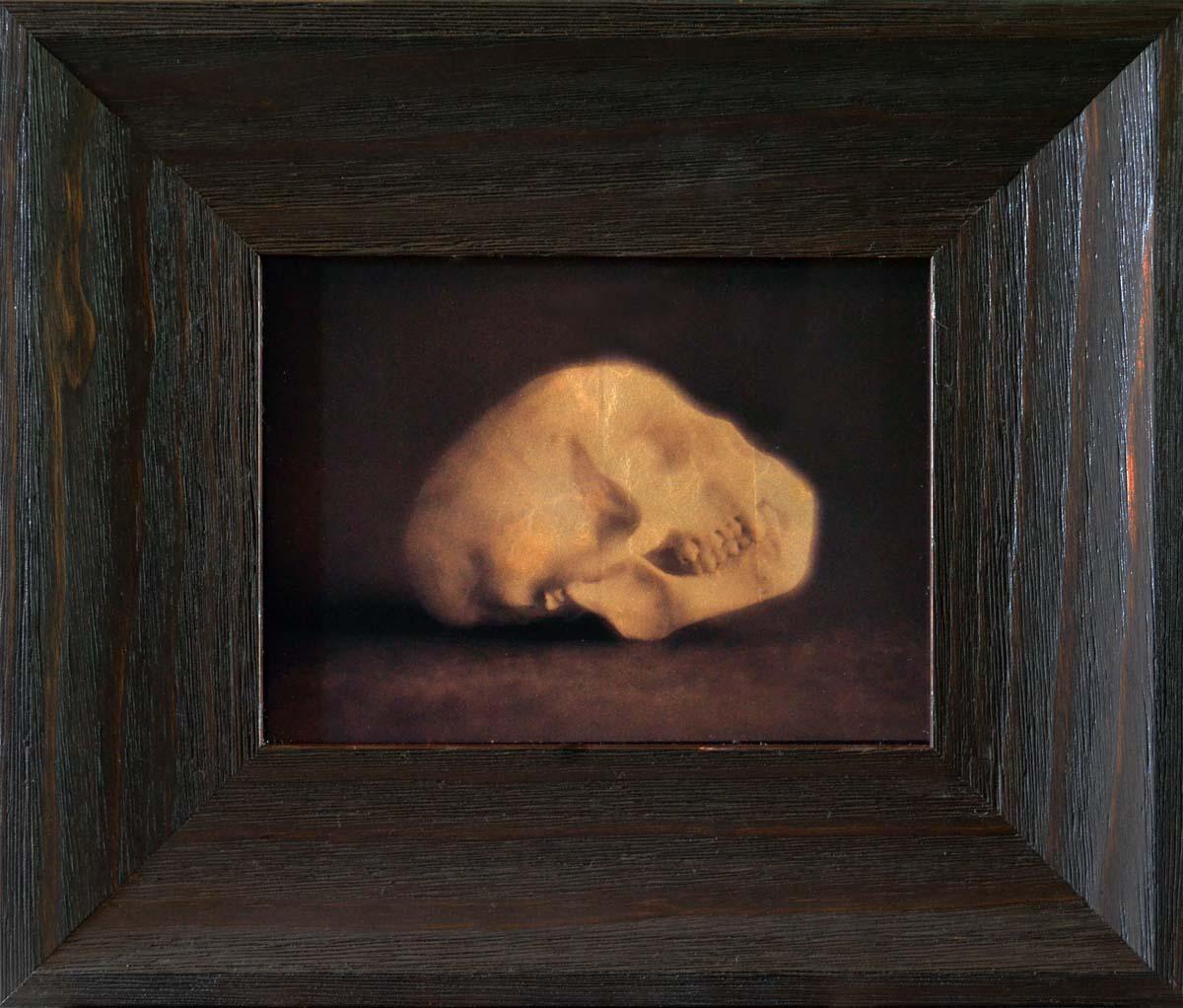 Velvet Monkey Skull