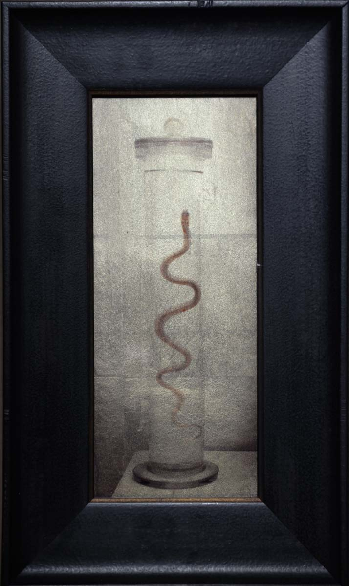 Snake in a Jar, Museum, Italy