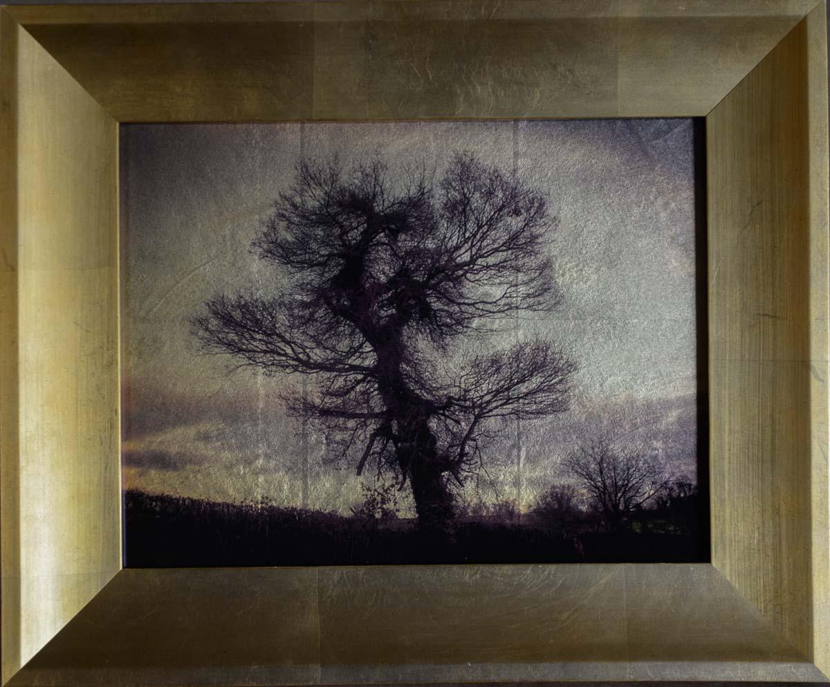 Big Tree, Midlands, UK