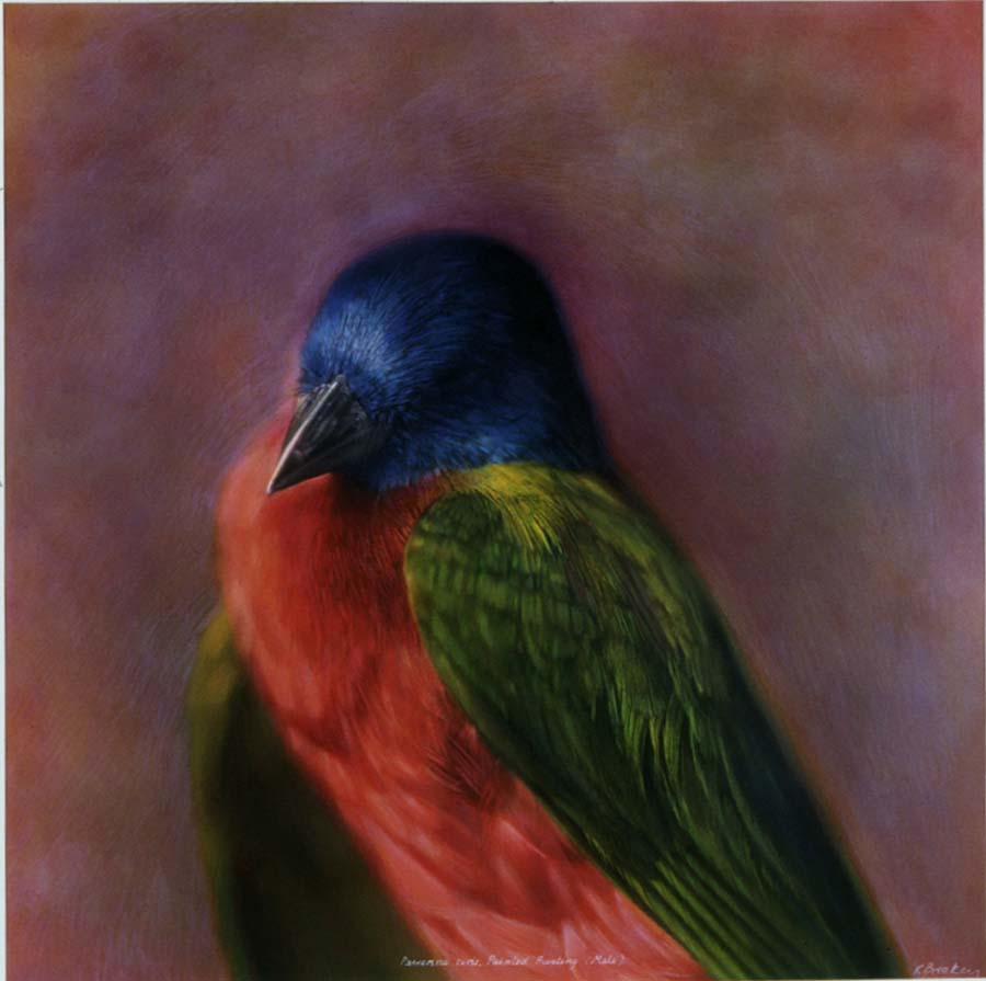 26. Passerina ciris, <BR>Painted Bunting (Male)