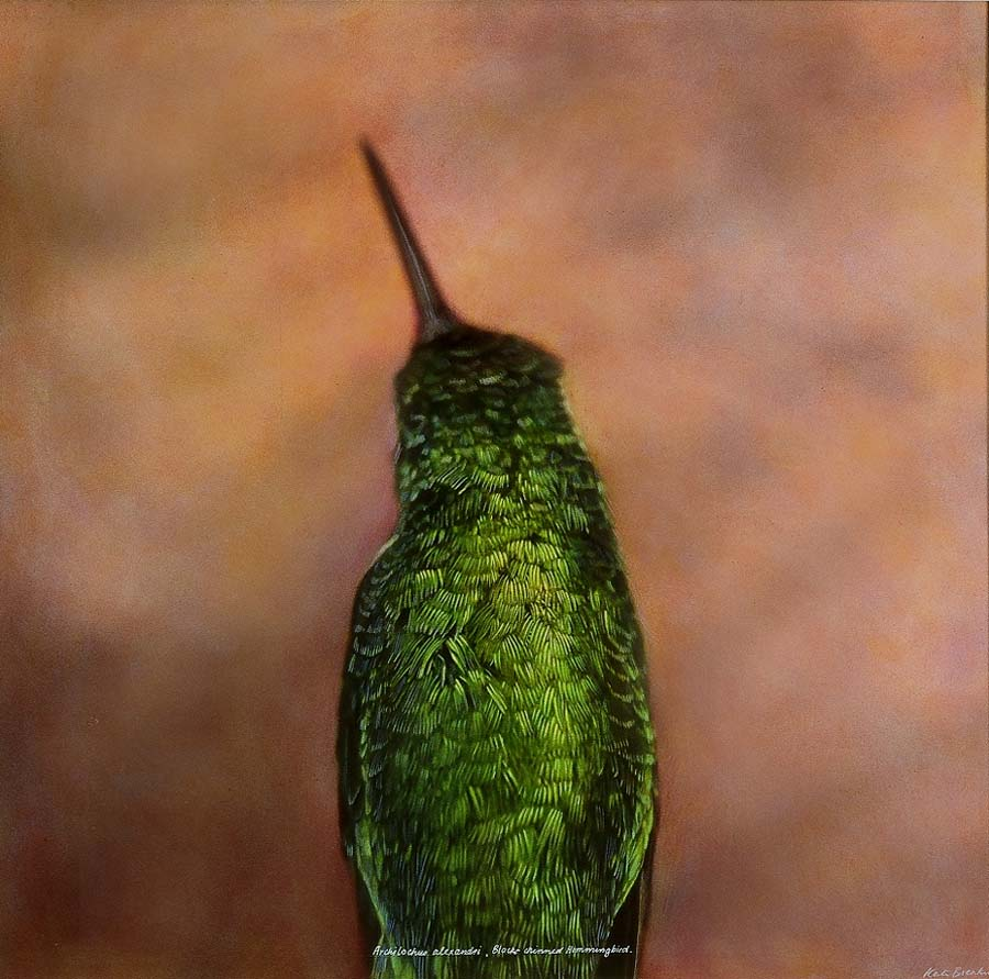 39. Black-chinned Hummingbird (Back)