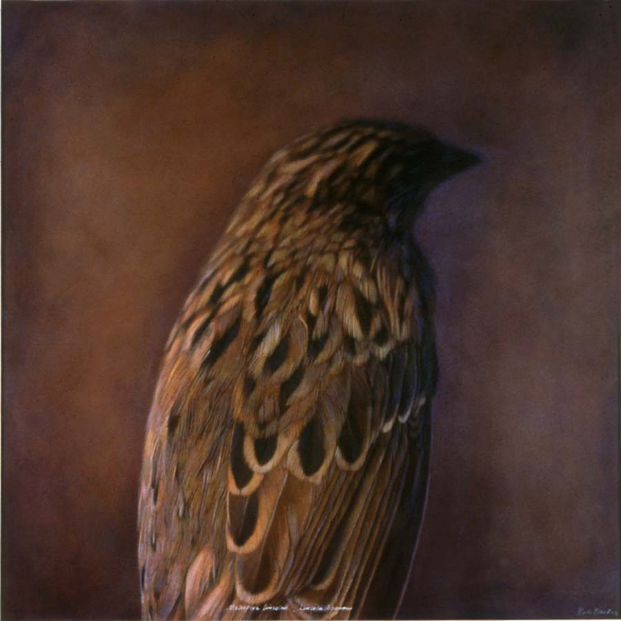 42. Melospiza lincolnii, <BR>Lincoln Sparrow I