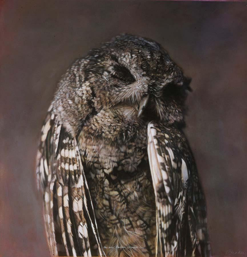 48. Otus asio, <BR>Eastern Screech Owl