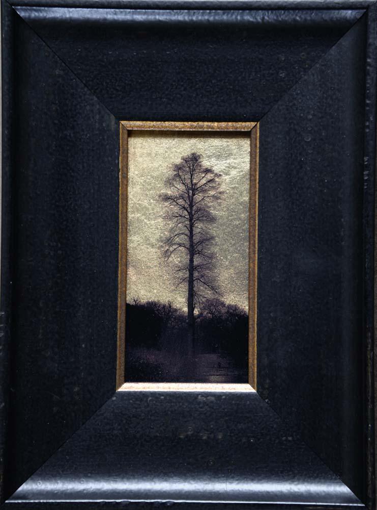 Single Tree, Kew Gardens