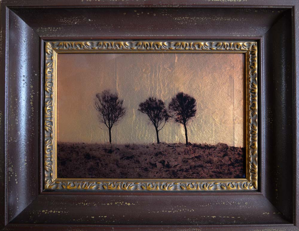 Three Sheoak Trees, Australia