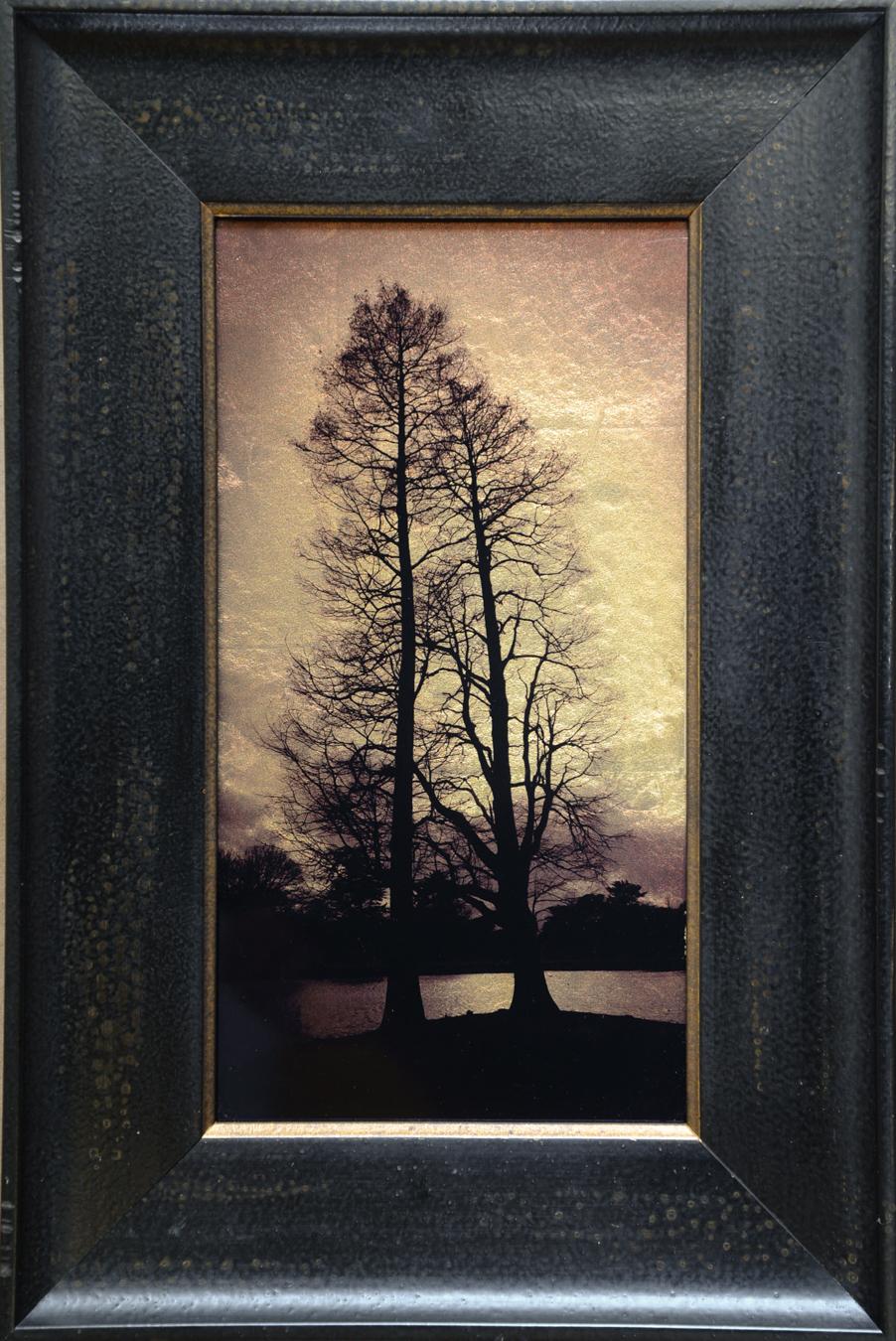 Two Trees, Kew Gardens