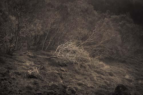 Fallen Branch, Mount Etna, Sicily