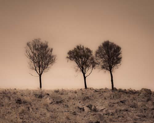 Three Trees, Mid North, South Australia
