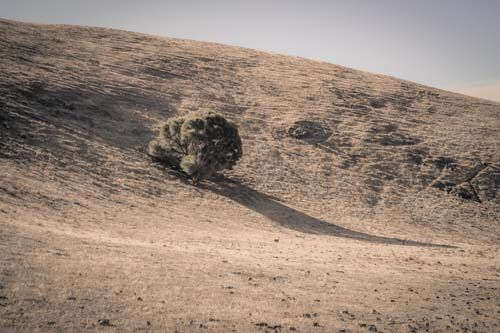 Tree with Long Shadow, Cape Cassini, Kangaroo Island, South Australia