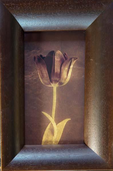 Black Tulip V