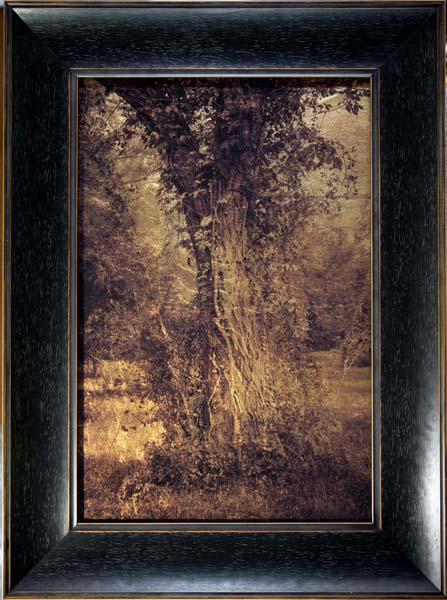 Tree Trunk with Vine, Plum Creek, Texas