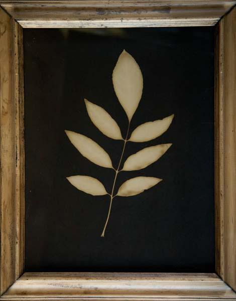 7 Pointed Leaf