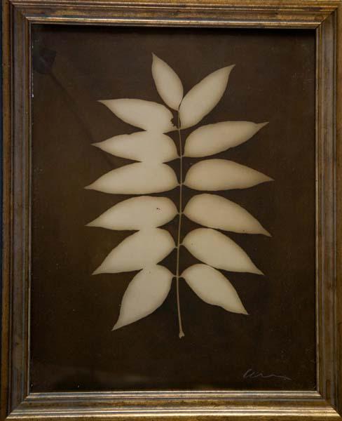 Botanical (13 Pointed Leaf)