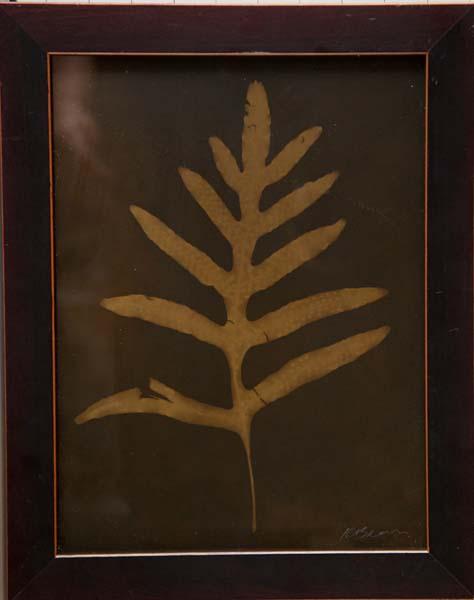 Botanical (Fern)