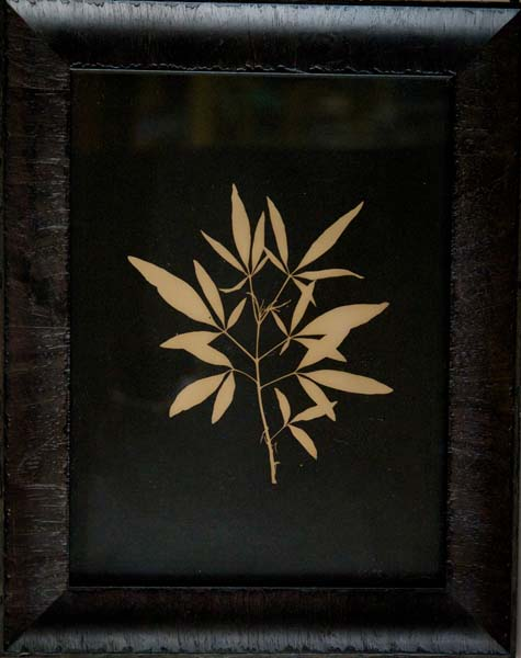 Chase Tree Leaf