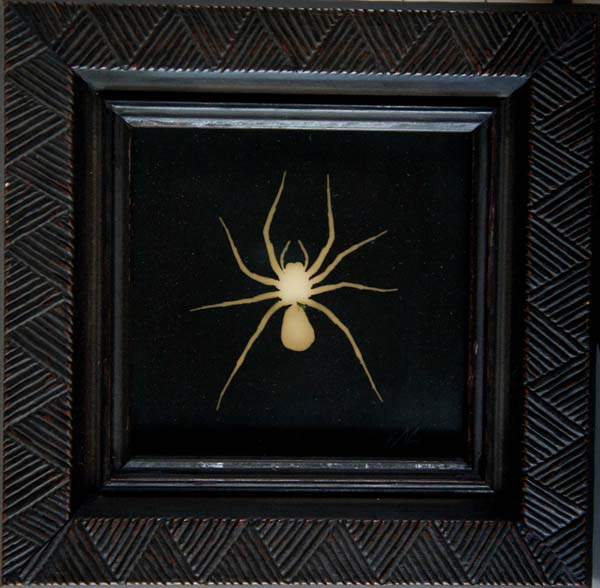 Fiddle Spider