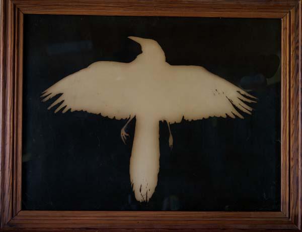 Grackle, Wings Spread