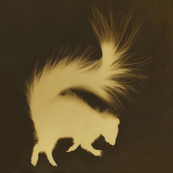 Western Hognosed Skunk