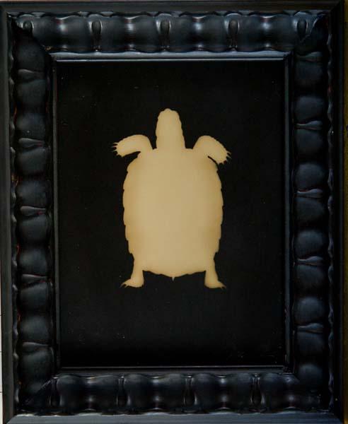 Sonoran Dersert Tortoise