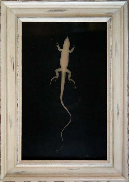 Single Whiptail Lizard