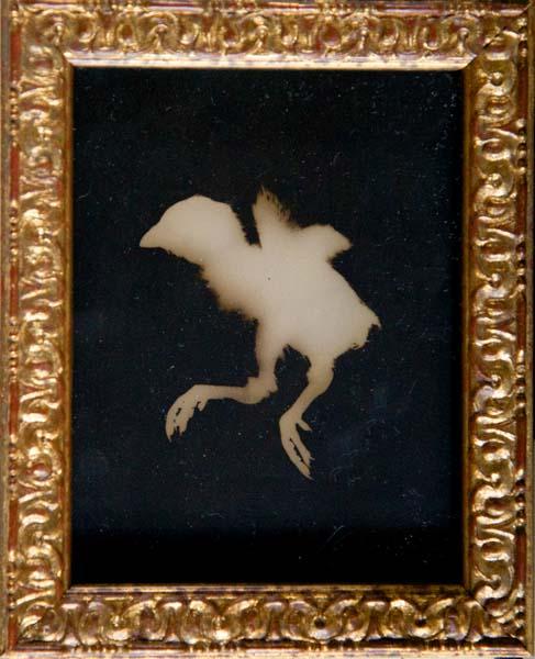Quail Chick (facing left)