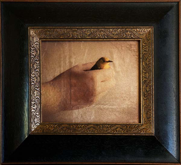 Prothonotary Warbler in Hand