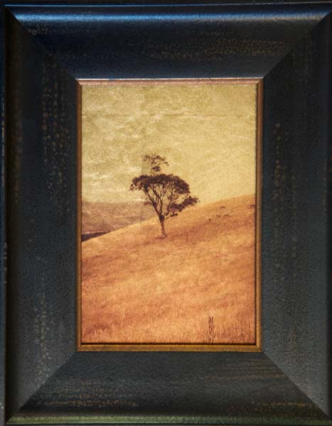 Eucalyptus Tree on Hillside