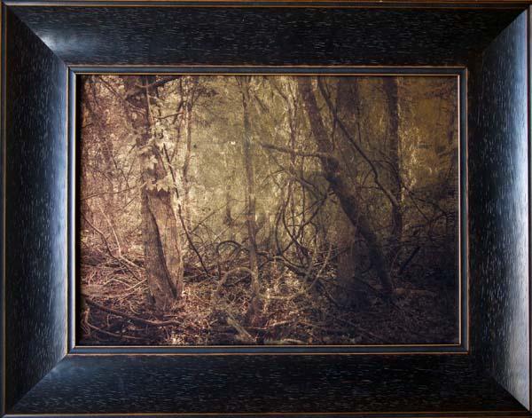 Plum Creek Woods I
