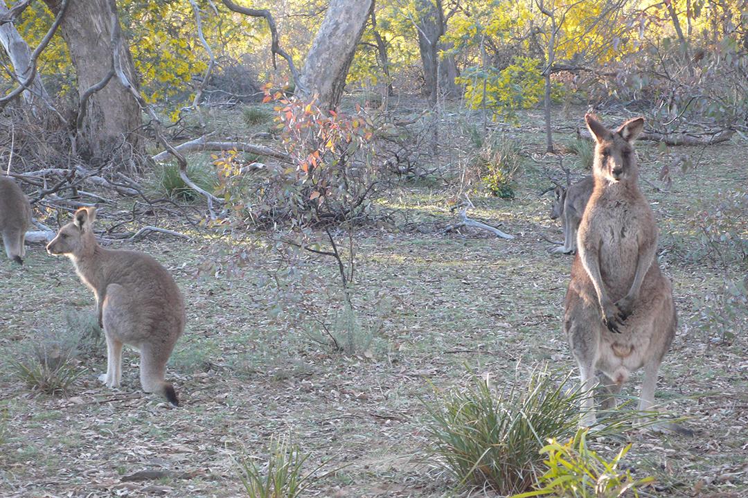 Mt. Ainslie, Australia