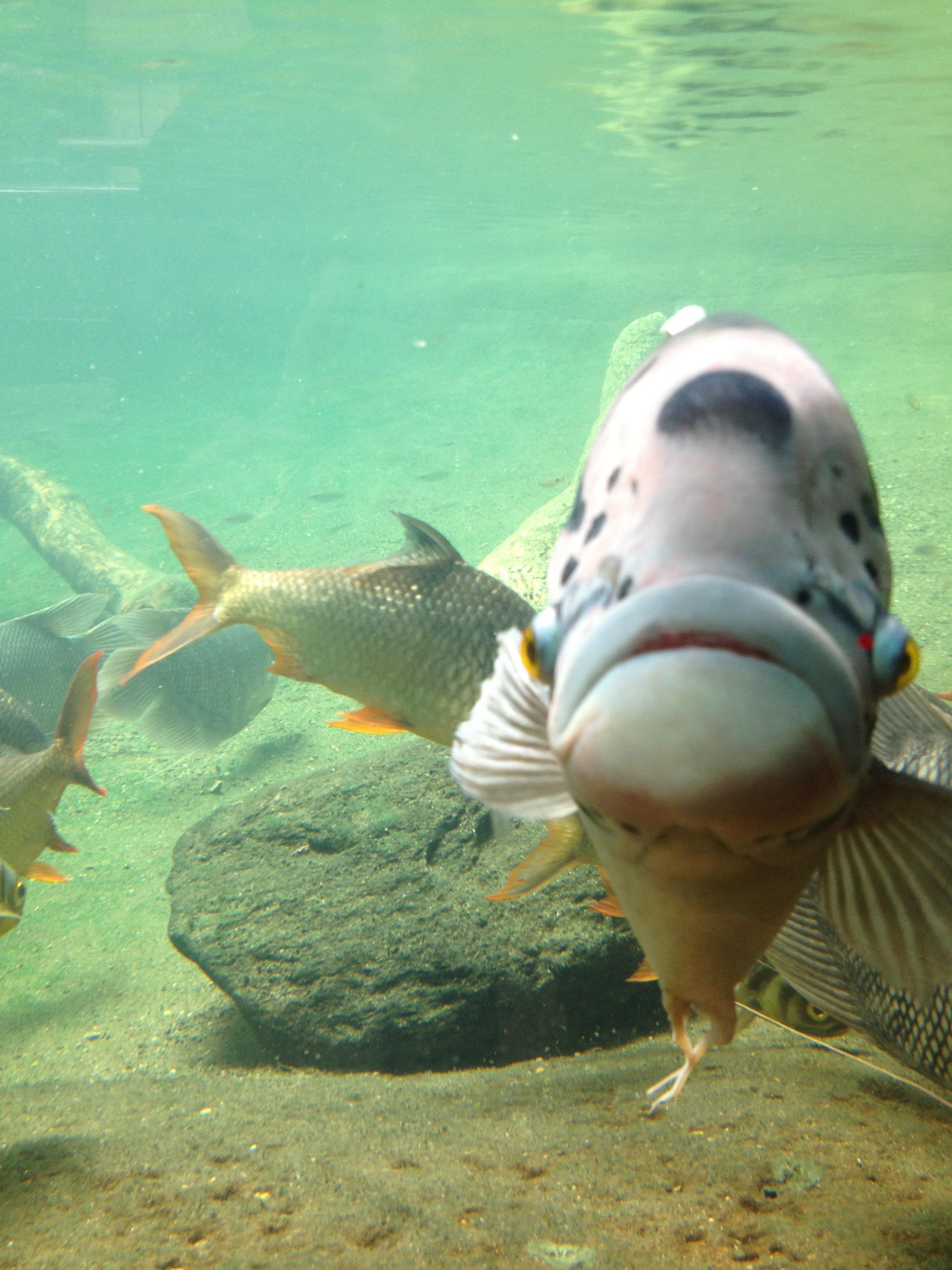 Fish, Bronx, NY