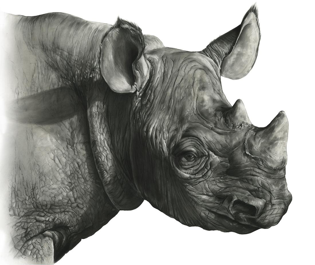 Black Rhino: Detail