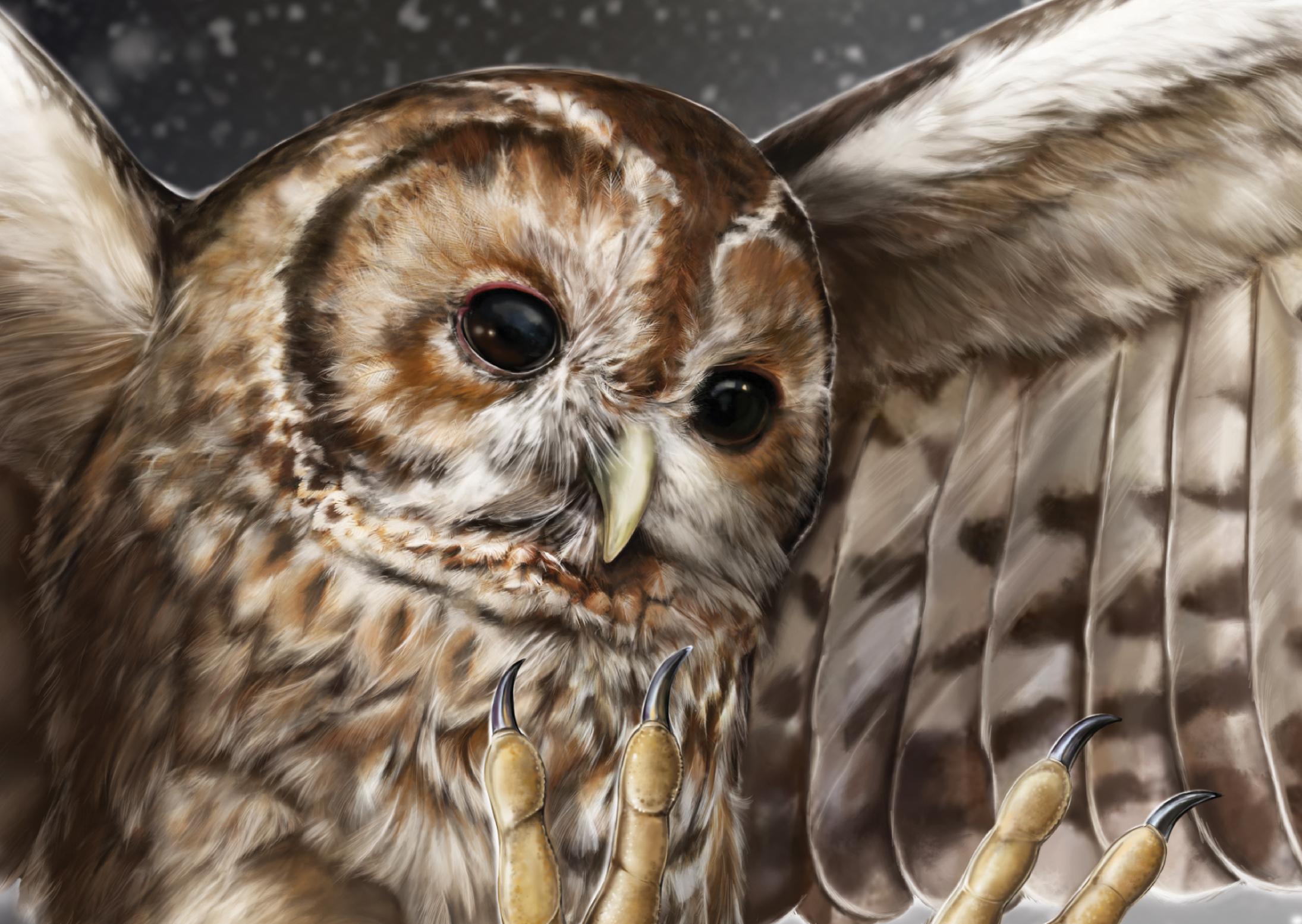 Tawny Owl: Detail