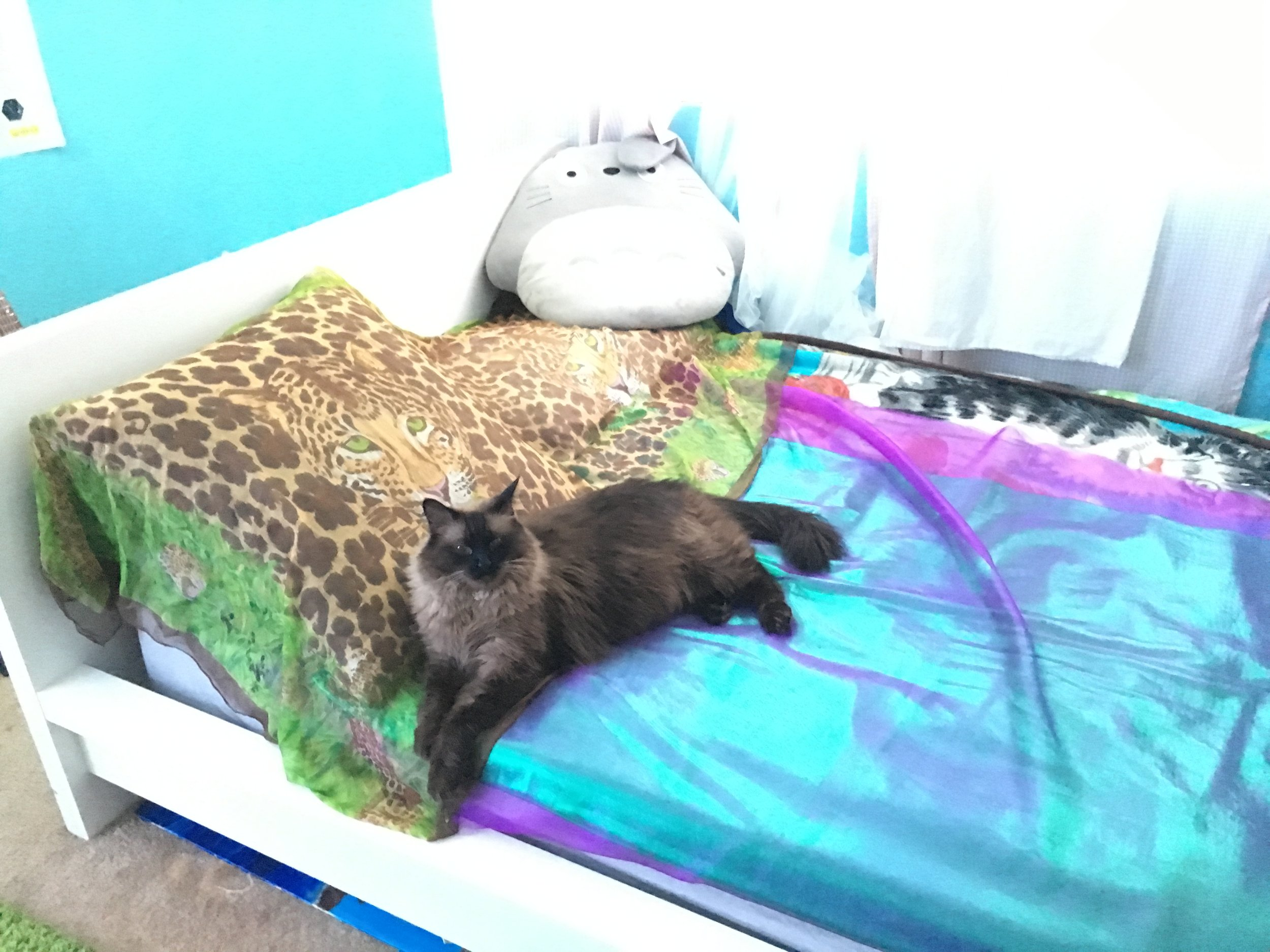custom bedding for my exotic cat
