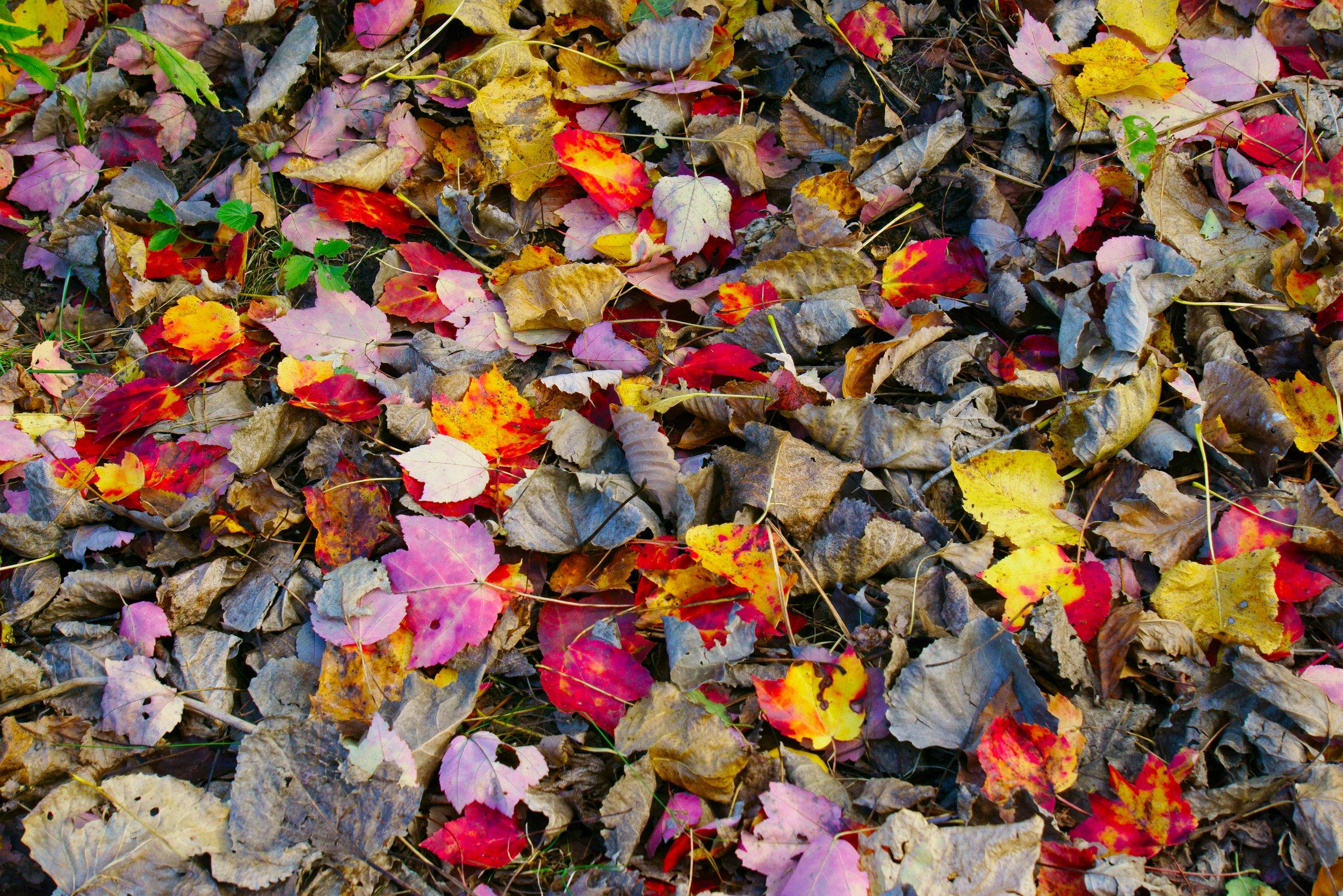 Leaf Scatter